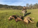 California Wild Boar Hunt