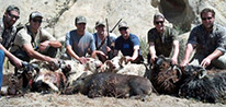 California Wild Pig Hunt Specials